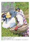 茶摘みの写真